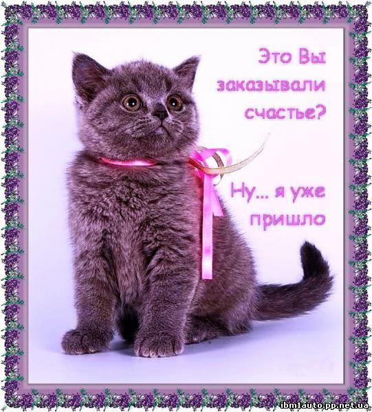 http://ibm1auto.pp.net.ua/zip1/kot.jpg